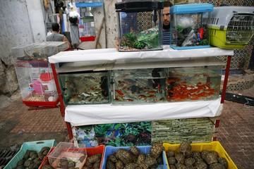 A man sells fish and turtles in Medina, Rabat's old city