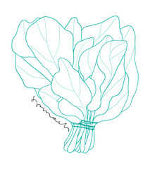 Hand drawn spinach bunch line art. Kitchen outlined  illustration