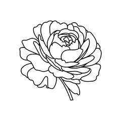 Flowers rose, black and white. Isolated on white background. Vector illustration.