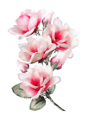 magnolia, watercolor flowers. card with floral illustration. Bouquet of flowers isolated on white background. Leaf and buds. Exotic composition for invitation