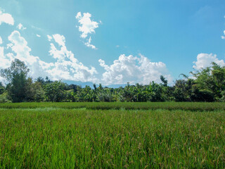 Grass field in a countryside with a clear blue sky