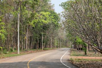 Road In The National Park,Kamphaenphet Thailand