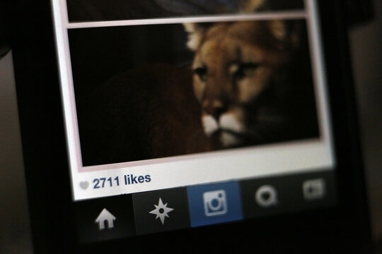 The number of likes on an Instagram photo are pictured on a mobile device screen in Pasadena