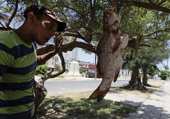 A youth stands beside a fish for sale in Havana