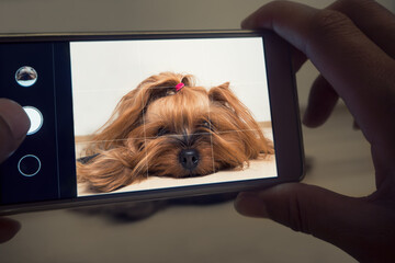 Female hand takes a small dog on the smartphone