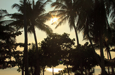 Palms behind the sky, tropical paradise
