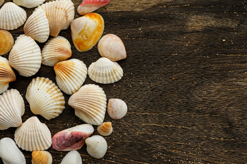 Seashells on wooden surface