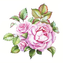 Watercolor drawing. A bunch of three pink roses with colorful leaves