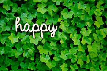 Happy - wooden word on green clover
