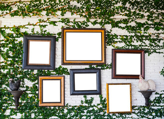 Picture frames on ivy wall, empty picture frames with copy space on vintage decoration interior
