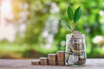 Plant growing Coins in glass  jar with investment financial concept  stack money and green nature sunshine background