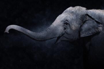 Wild elephant in the rains.