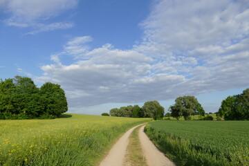 Wanderweg im Mai