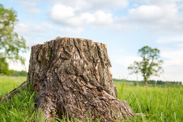 Tree stump and green grass