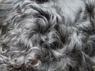 ミニチュアダックスの毛並み