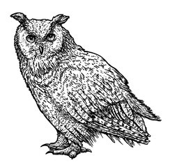 Owl illustration, drawing, engraving, ink, line art, vector