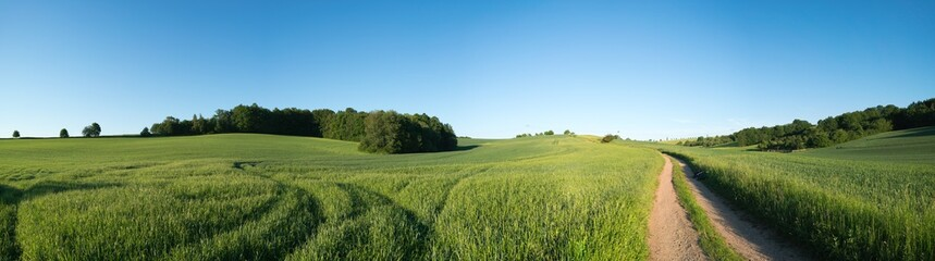 Photo sur Plexiglas Culture Panorama summer green field landscape with dirt road