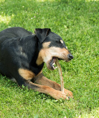 Zahnpflege beim Hund
