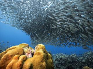Unterwasser - Riff - Korallenriff - Fischschwarm - Schwamm - Taucher - Tauchen - Curacao - Karibik