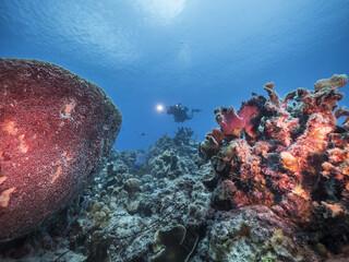 Unterwasser - Riff - Korallenriff  - Schwamm - Taucher - Tauchen - Curacao - Karibik