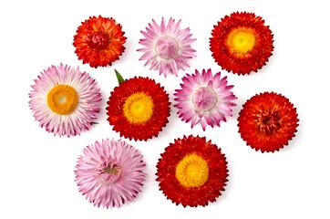 Strohblumenblüten