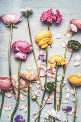 Fotobehang Roze Flowers flat lay with beautiful flowers and petals, on vintage turquoise background, top view