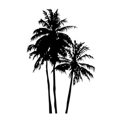silhouette of realistic three coconut trees, palm trees illustration, vector summer sign