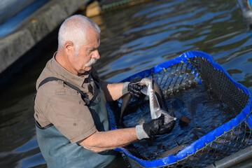 Fish farmer in water