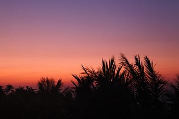 Силуэты пальм на рассвете.