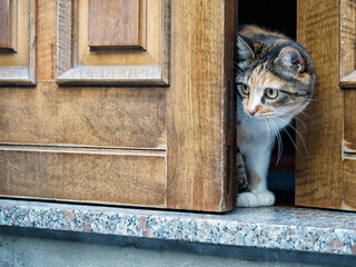 Wary cat at door. Note candid shot, narrow depth of field, focus on eye. Cat was watching a group of MANY dogs go by!