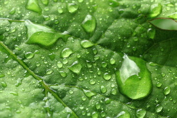 Leaf of grapes in raindrops. Macro photography