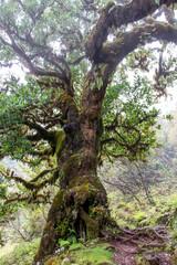Knochige mystische Bäume in einem traumhaften Landschaft
