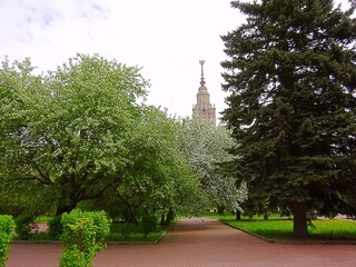 Apple trees in a nasty day in the campus of Moscow university