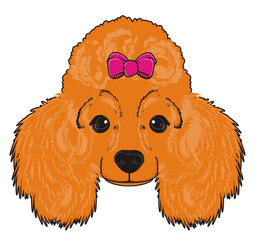 Poodle, dog, puppy, cartoon, friend, pet, animal, hair, nose, breed, grace, funny, muzzle, snout, face, head, orange, pink, bow, girl,