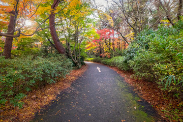 Autumn scenery in Japanese Garden of Showa Memorial Park, Tokyo, Japan