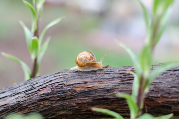 A Snail in the Rain, Snail in the garden on the wood