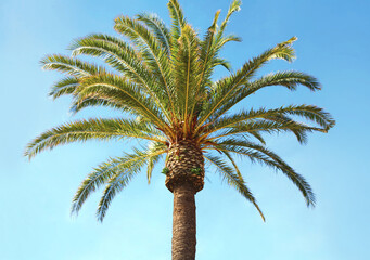 Travel, tourism, vacation, nature and summer holidays concept - palm tree over a blue sky background