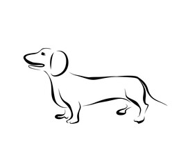 Drawing dachshund silhouette