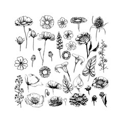 Set of handdrawn doodle sketch style black and white herbs and flowers, vector illustration. Peony, Poppy, chamomile, and other wildflowers.