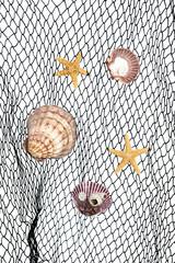 Seashells on fishing net