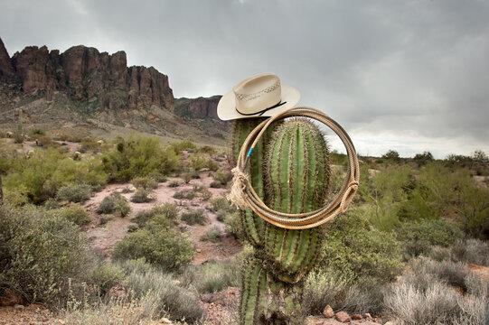 Lasso on cactus