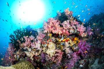 Poster Under water Colorful Underwater Reef