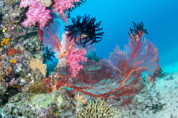 Deurstickers Onder water Beautiful pink tropical reef