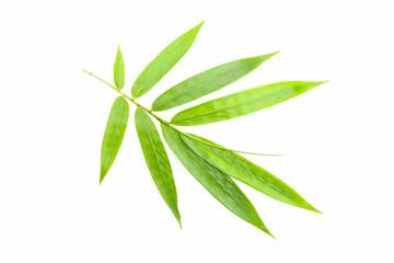 liść bambusa na białym tle.