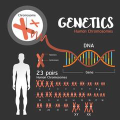 Genetics DNA structure