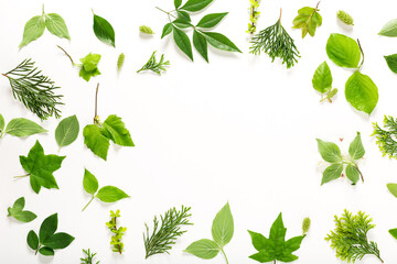 Collection of green leaves top view Wall mural