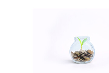 coins and plant in bottle, Business investment growth and saving concept with copy space.