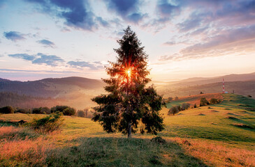 Wall Mural - Tree and sun