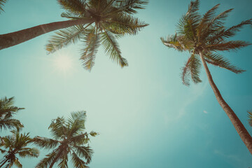 Palm trees with coconuts at clear sunny summer day vintage toned