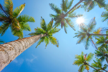 Tropical coconut palm tress with shining sun